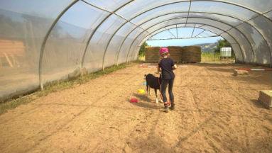 médiation animale : parcours d`un enfant avec une chèvre